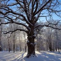 Park Oak
